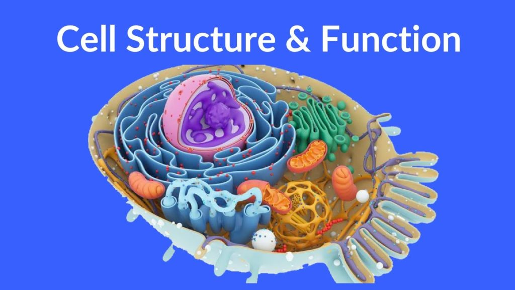 cell functions